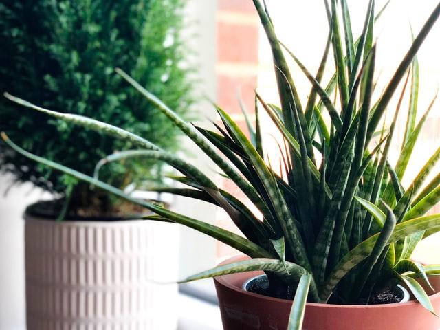 צמחיה מלאכותית לועדי בתים